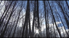 Stock Video Footage of Tall Trees Swaying In Strong Wind With Sunlight