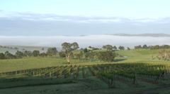 Stock Video Footage of Australia Outlook Hill sun creeping up vineyard