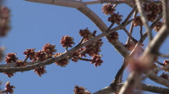 Spring buds on trees in Toronto at Humber bay park Stock Footage