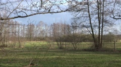 4k Flock of birds in nature reserve marshland spring season Stock Footage