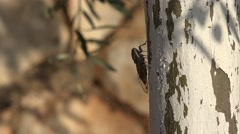 4K Horsefly, Gadfly, Insect, Fly, Flyer on Tree Lefkada Greece, Dangerous Botfly Stock Footage