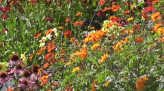 Beautiful Summer Flowers Blooming in Summer Sunshine Stock Footage