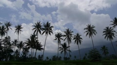 Palm trees and clouds,Lake Maninjau,Sumatra,Indonesia Stock Footage
