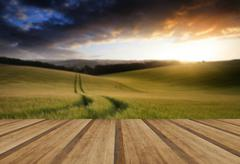 Beautiful Summer landscape of field of growing wheat crop during sunset with Stock Illustration