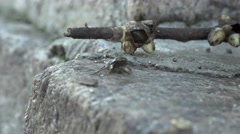 Crab sitting on rock on shore 4k Stock Footage