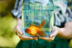Jar with gold fish in hands Stock Photos