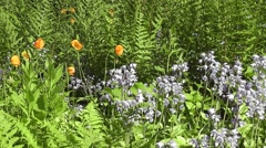 Stock Video Footage of Summer Wildflowers with Lush Green Foliage Backdrop