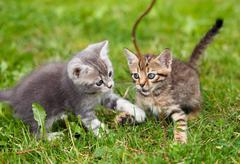 Playful kittens Stock Photos