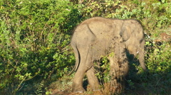 Small fun indian baby elephant in jungle Stock Footage