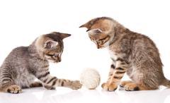 Playful striped kitten Stock Photos