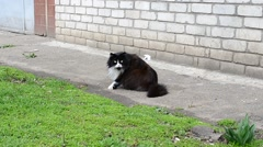 Cat near the house Stock Footage