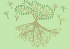 Root system Stock Illustration