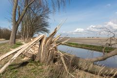 Dutch farmland with blown down tree after heavy spring storm - stock photo