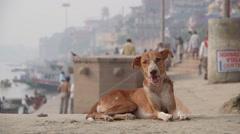 A dog on the ghat,Varanasi,India - stock footage