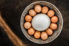 Bakers Dozen of eggs including an ostrich egg. - stock photo