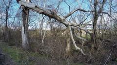 Broken trees Stock Footage