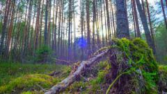 spring forest and the sun, time-lapse - stock footage