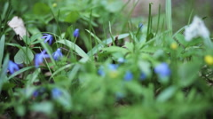 Stock Video Footage of fresh spring flowers growing near the mountain river