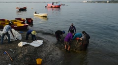 Fisherman are packing the green mussel in bag Stock Footage