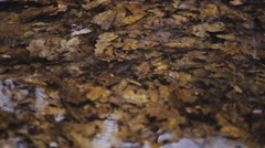 Yellow oak leaves on the bottom of the cold mountain river Stock Footage