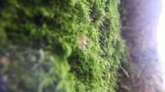 Moss close up Stock Footage
