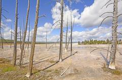 Petrified Trees Frame a Thermal Area Stock Photos