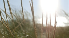 Close of dune grass Stock Footage