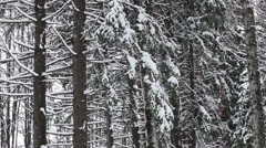 Winter View in Forest Stock Footage