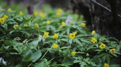 Fresh spring flowers growing near the mountain river Stock Footage
