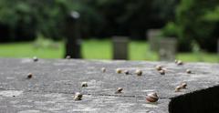 Slugs On Stone - stock photo