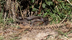Group of Male Adders Stock Footage