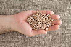 Man holding a handful of dried pinto beans - stock photo