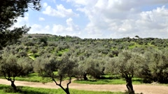 Time lapse of olive grove in Israel Stock Footage