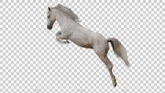 Horse White Jumps Stock Footage