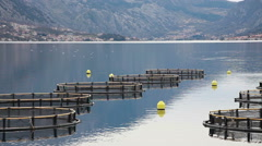 Coastal fish farming in Montenegro Stock Footage