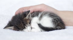 hand stroking  kitten - stock footage