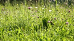 Green grass on the pasture Stock Footage