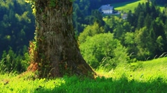 Big tree and summer hills Stock Footage