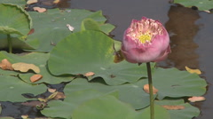 Water flower at Ancient Siam Park in Samut Prakan Province,Thailand Stock Footage
