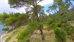 Aerial footage of tree at island near sea Stock Footage