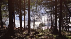 River flows in the forest in spring Stock Footage