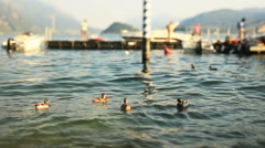 Ducks in the waves Stock Footage