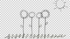 Growing seeds of sunflowers hand draw animation - stock footage