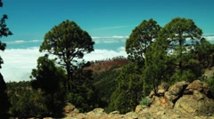 Pinus canariensis forest  Tenerife time lapse Stock Footage