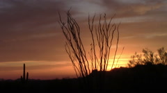 Ocotillo Tree sunset in the Superstition Mountains, Arizona Stock Footage