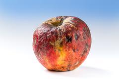 Old rotten apple - stock photo