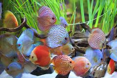 colored discus - stock photo