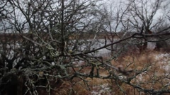 Branches without leaves Stock Footage
