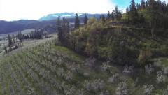 Aerial Scenic View: Pear Orchard Pan From Drone Stock Footage