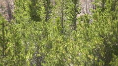 Panoramic view of Rocky Mountain National Park, Colorado - stock footage